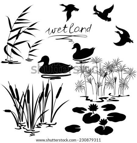 stock-vector-set-of-silhouettes-of-water-plants-and-ducks