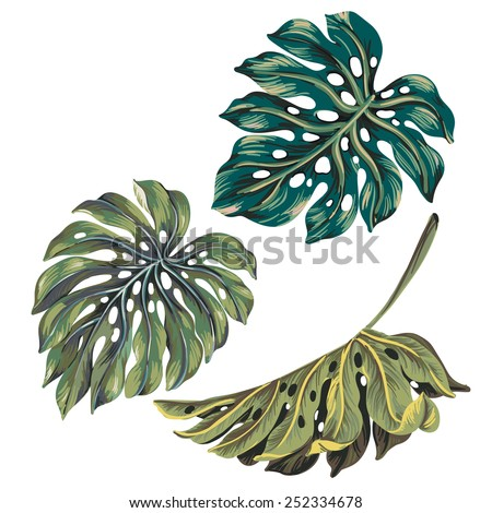 set of 3 single vector monstera