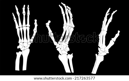 skeleton hand vector download free vector art stock graphics images rh vecteezy com Skeleton Hand Pointing Finger hand bones vector