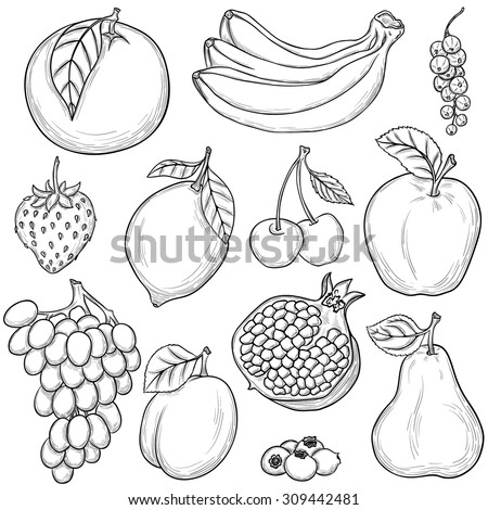 set of sketched fruits isolated