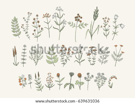 Set of sketchy hand drawn flowers. Vintage style field flowers and plants illustration collection. Creative vector floral elements for package of postcard decoration. #639631036