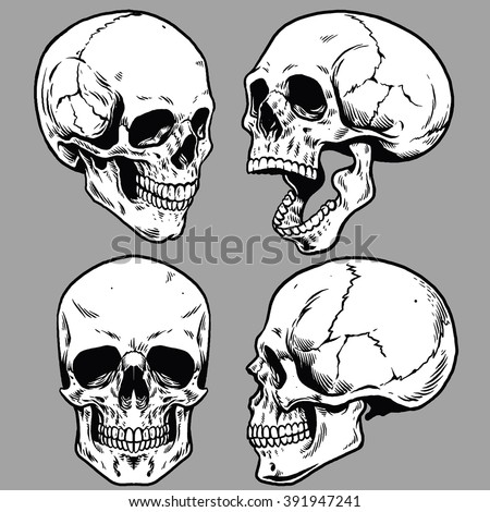 set of skull in hand drawing style