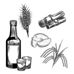 Set of soju. Korean traditional alcohol drink soju. Wheat, sweet potato, rice, bamboo stalk, shot glass, bottle vodka. Vintage engraved style. Vector illustration
