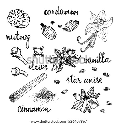 Set of spices: nutmeg, cardamom, cloves, vanilla, star anise, cinnamon. Hand drawn spices in sketchy style isolated on white background. Vector illustration.