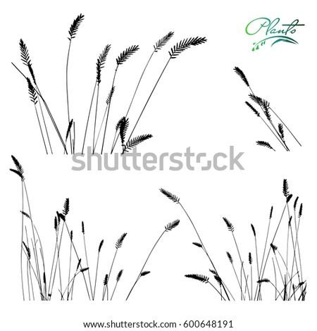 set of spikelets of grass
