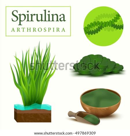 Set of spirulina algae, tablets, pills, powder and cells. Arthrospira seaweed dietary supplement image. Superfood vector illustration