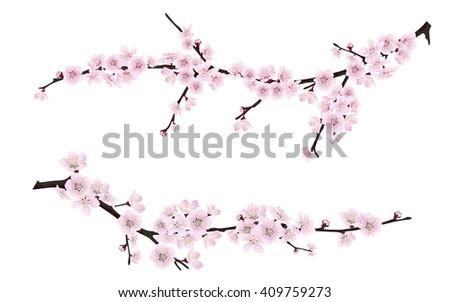 set of spring blooming tree