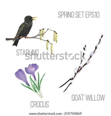 set of spring elements for web