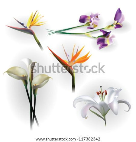 Set of spring flowers for design purposes. Fully editable vector.