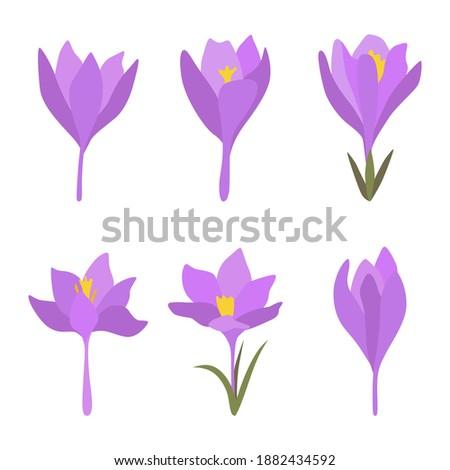 set of 6 spring flowers purple