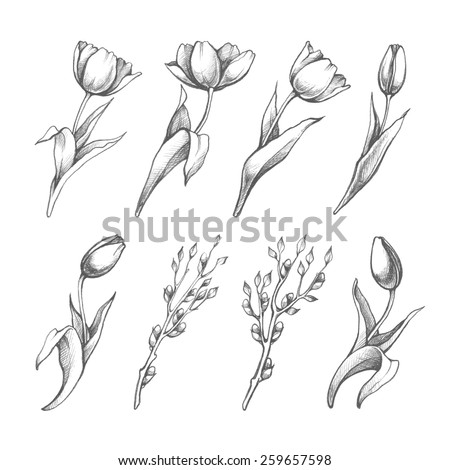 set of spring flowers tulips