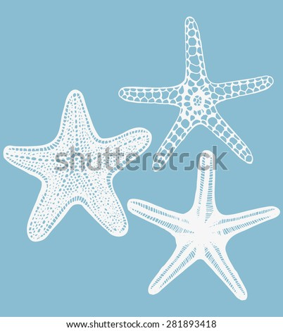 Set of Starfishes. Collection of Sea Design Elements in Hand Drawn Graphic Style. Vector Illustration