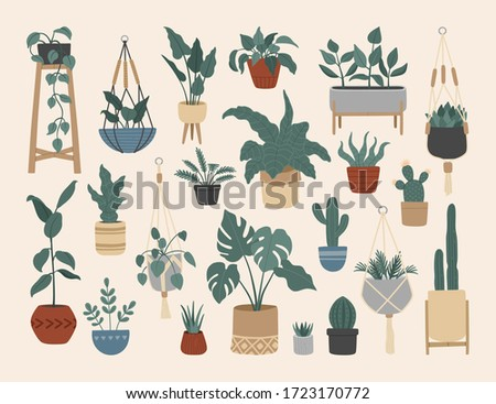 Set of stylish vintage house plants, hand drawn flowers in pots, hanging macrame planters, Scandinavian interior with monstera, cacti, ficus. Vector illustration, cartoon flat style.