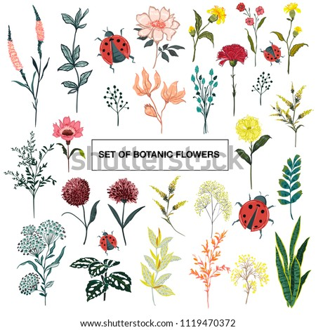 stock-vector-set-of-summer-wild-floral-greeting-card-with-blooming-garden-flowers-botanical-natural