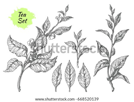 set of tea bush branches with