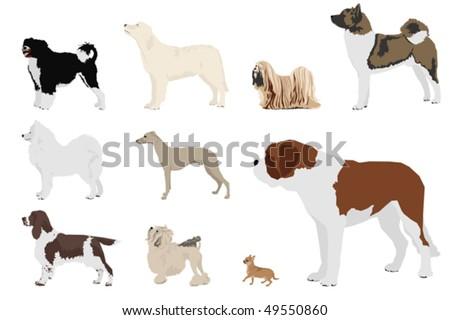 set of ten dog breeds