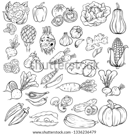 set of the hand drawn sketch style different vegetables isolated on white.  #1336236479