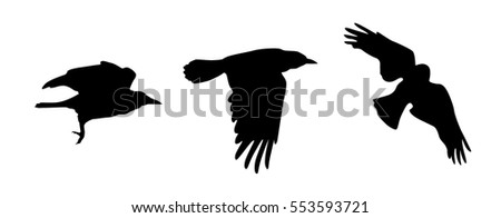 set of three flying crow