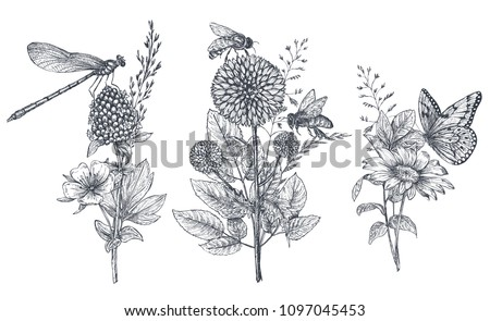 Set of three vector floral bouquets with black and white hand drawn herbs, wildflowers and insects, butterfly, bee, dragonfly in sketch style.