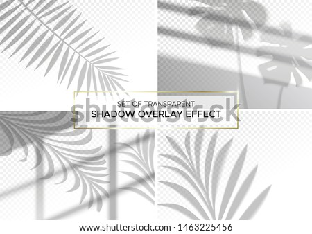 Set of transparent shadow effects for branding. A4 format Mockups. Scenes of natural lighting. Photo-realistic vector illustration. The monstera leaves, palm branches and window frames overlay shadows