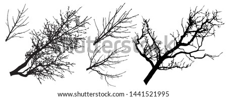 Set of tree branches silhouettes, vector illustration