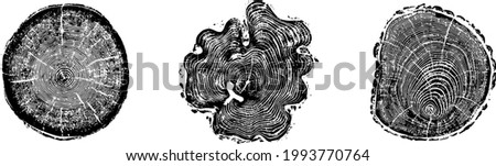 Set of tree log woodcut rings print background in grunge texture vector illustration.