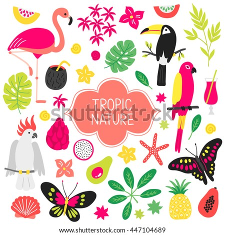Set of tropical elements. Flamingo, butterfly, toucan, macaw, shell, cocktail, \ bamboo, carambola, avocado, dragon fruit, cockatoo, pineapple, starfish. Cartoon design