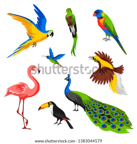 Set of tropical exotic birds. Wild fauna of jungle and rainforest.