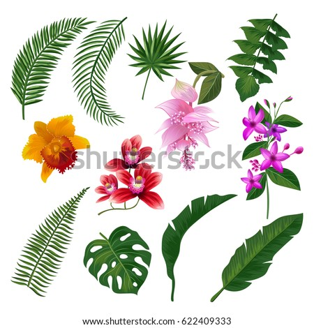 set of tropical flowers bouquet