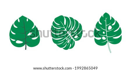 Set of tropical leaves. Hibiscus aloha branch leaf collection
