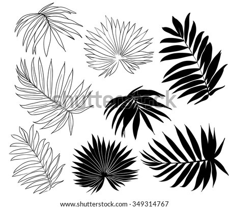 Set of tropical palm leaves, black silhouettes isolated on white background. Vector