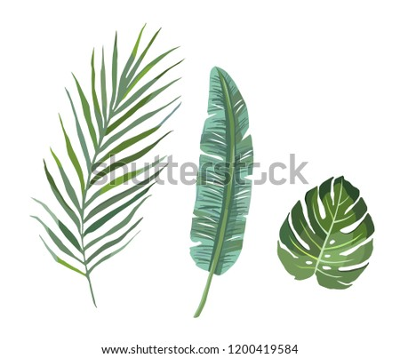 Set of tropical plants leaves.