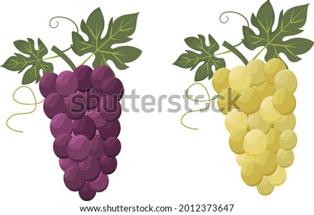 set of two bunches of grapes