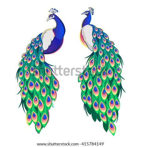 Set of two peacocks isolated on white background. Vector illustration. Foto stock ©