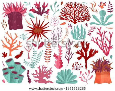 Set of underwater ocean coral reef plants, corals and anemones. Aquatic and aquarium seaweeds, tropical coral-reef elements. Marine algae, sea wildlife, sponges and seagrasses elements collection.
