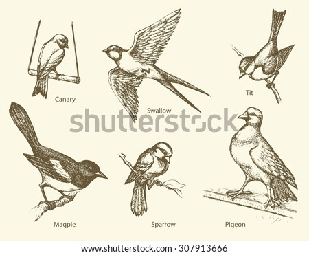 set of urban city park birds