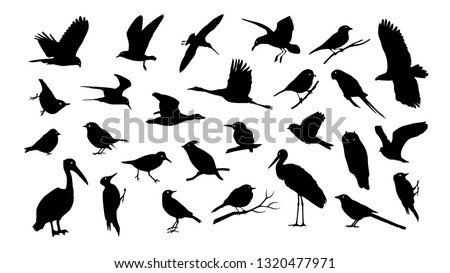 set of various bird vector