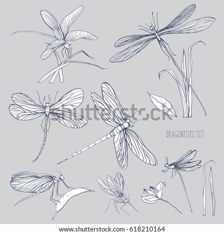 set of various dragonflies in