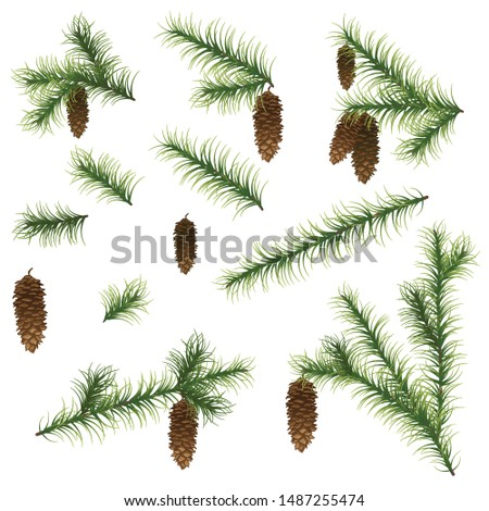 Set of various green, realistic fir branches with cones for the design of Christmas decorations. Christmas, New Year fir branches. Isolated on white, vector illustration.