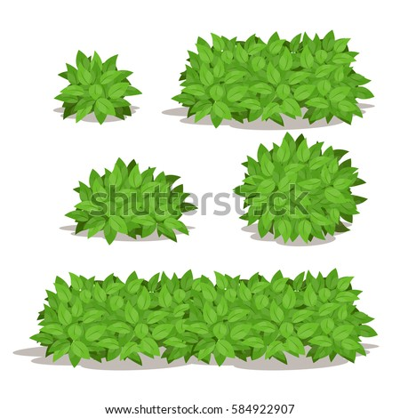 Set of Various Isolated Bush.Different Shape of Bush Vector Illustration.