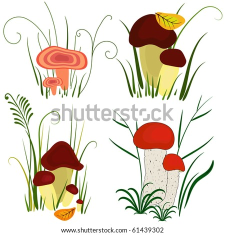 Set of various mushrooms on white (vector)