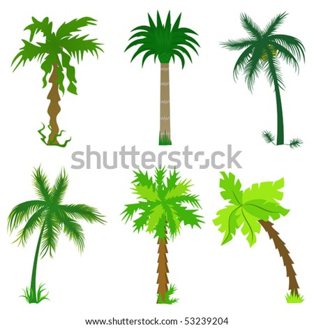 Set of various palm trees. Objects isolated. Vector tropical collection for Your design