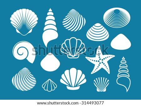 set of various white sea shells