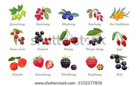 Set of vector berries isolated. Gooseberry,cranberry, blueberry, barberry, sea buckthorn,camu camu, currant, cherry, maqui berry, goji, acerola, Strawberry, blackberry, raspberry, acai. Cartoon flat