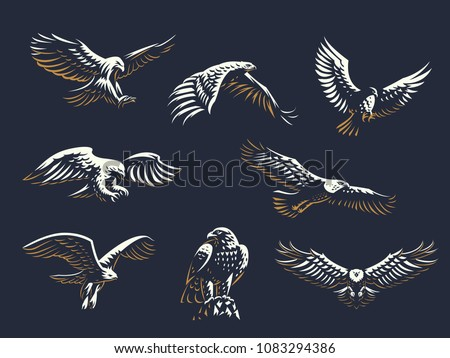 stock-vector-set-of-vector-birds-eagles-and-hawks