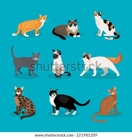 set of vector cats depicting
