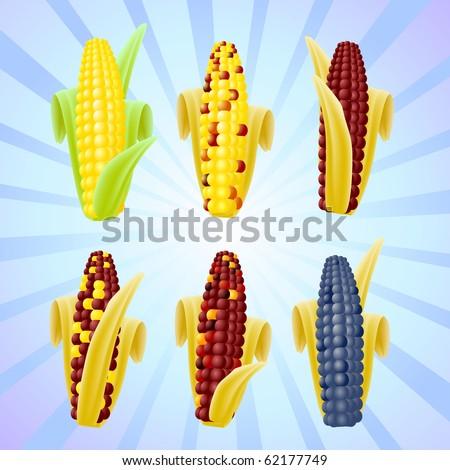 Set of vector corn varieties - stock vector