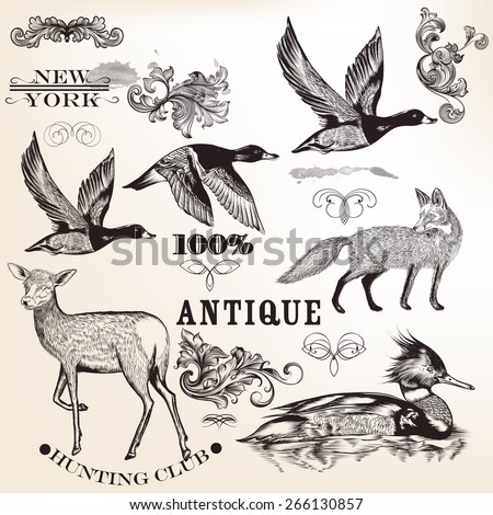 set of vector detailed animals
