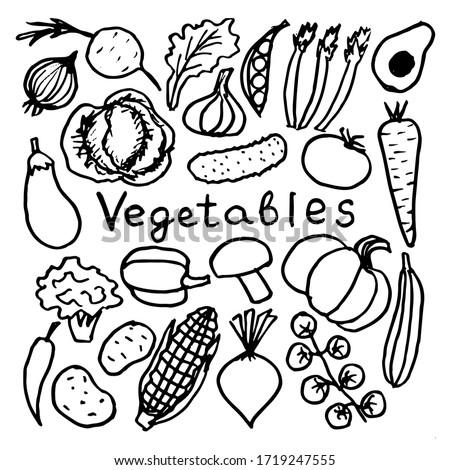 Set of vector doodle images, vegetables illustration.