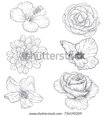 set of vector drawing flowers